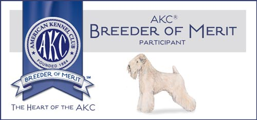 AKC Breeder of Merit - Wheaten Terrier
