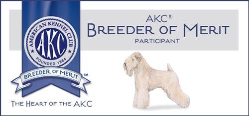 AKC Breeder of Merit - Wheaten Terrier