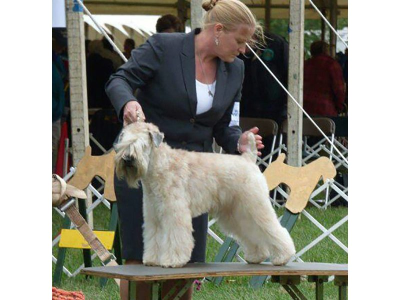 Sherri With Fiona SCWT National Specialty 2015