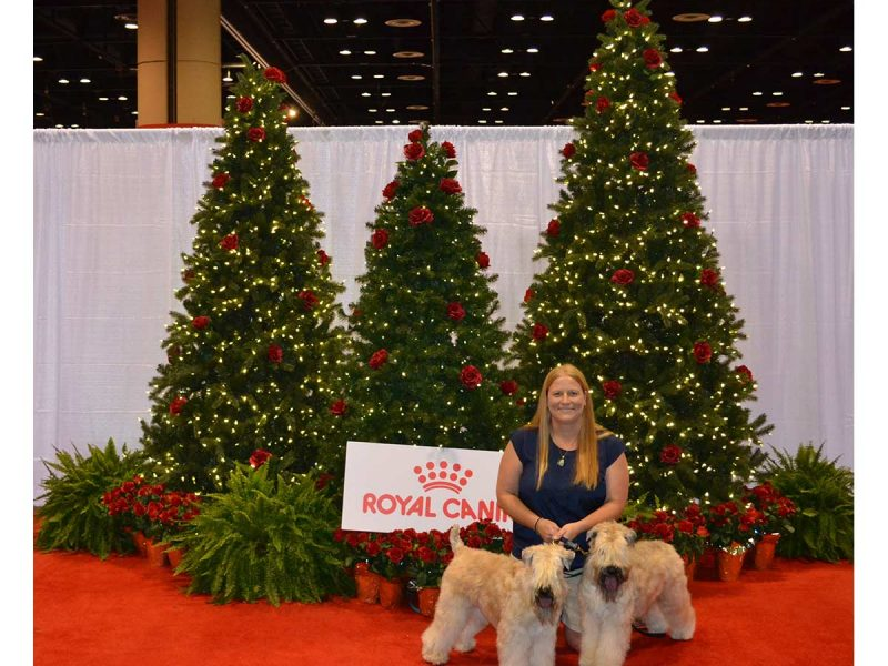 National Dog Show Orlando 2016
