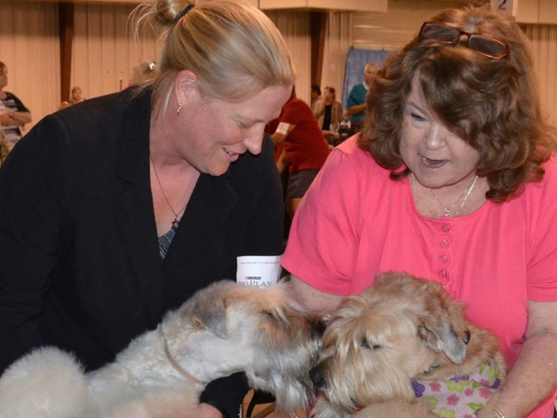 Fiona and Piper (Littermates) Meet Up at Orlando Dog Show - 2015