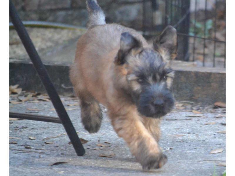 Puppy - 2014