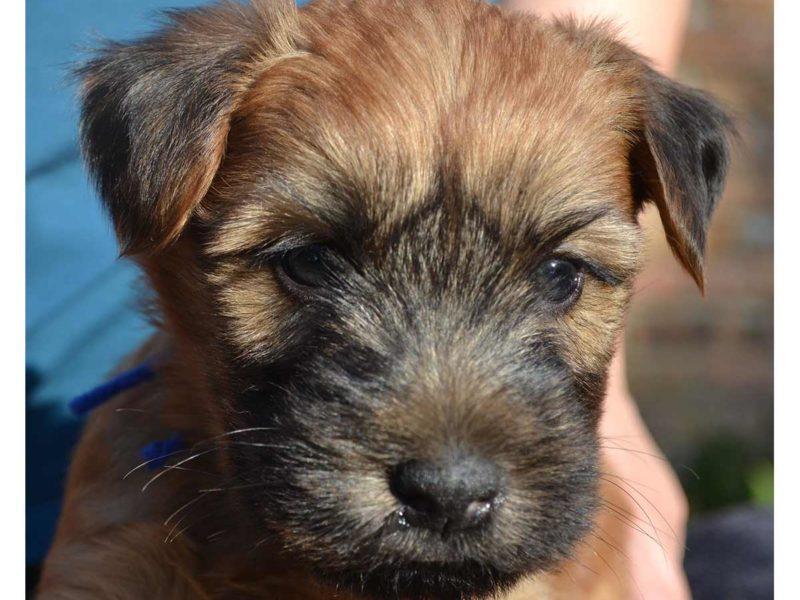 Wilson as a Puppy - 2014